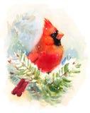 Кардинальная покрашенная рука иллюстрации зимы акварели птицы Стоковое Изображение RF