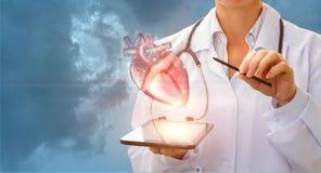 Кардиолог демонстрирует сердце стоковое изображение rf