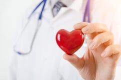 Кардиолог держа модель сердца 3D стоковая фотография rf
