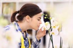 Касания и запахи женщины орхидея стоковое изображение