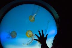 Касаться медузам Стоковое Фото