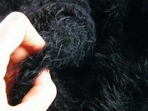Касающие шерсти имитировать ткани стоковое изображение rf