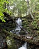 каскадируя водопад семг реки Стоковое Изображение RF