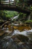 каскадируя река пропуская через влажный и мшистый утес окруженный зеленым лесом Стоковые Фото
