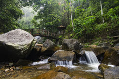 Каскадируя тропическое река окруженное зеленым лесом, намочило и мшистый утес Стоковые Изображения RF