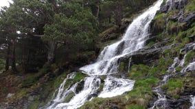 Каскад потока в горах между елями весной Вода отскакивает с утесов Взгляд в Пиренеи акции видеоматериалы