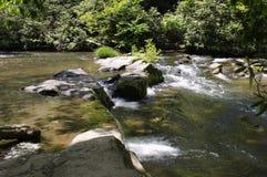 Каскадируя вода смотря через поток Стоковые Изображения