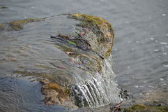 Каскадируя вода, Стоковые Изображения