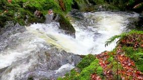 Каскадируя водопад воды акции видеоматериалы