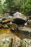 Каскадируя тропическое река окруженное зеленым лесом, намочило и мшистый утес Стоковая Фотография RF