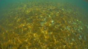 Каспийское море под водой сток-видео