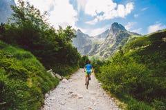 Катание велосипедиста в высоком Tatras, Словакии стоковые фото