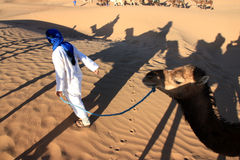 Катание верблюда стоковое изображение