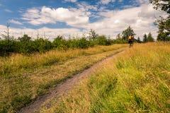 Катание велосипедиста горы задействуя в горах и древесинах Стоковая Фотография RF