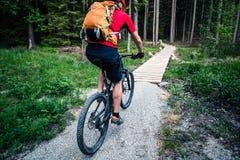 Катание велосипедиста горы задействуя в лесе лета Стоковое Изображение