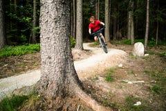 Катание велосипедиста горы задействуя в лесе лета Стоковое Изображение RF