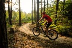 Катание велосипедиста горы задействуя в лесе лета Стоковая Фотография RF
