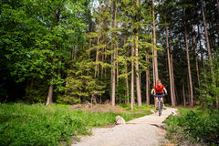 Катание велосипедиста горы задействуя в лесе лета Стоковое Фото