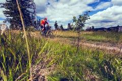 Катание велосипедиста горы задействуя в древесинах и горах Стоковое Изображение RF