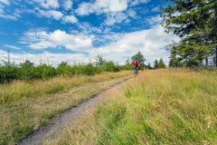 Катание велосипедиста горы задействуя в древесинах и горах Стоковая Фотография