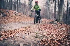 Катание велосипедиста горы на следе в древесинах осени Стоковые Фото