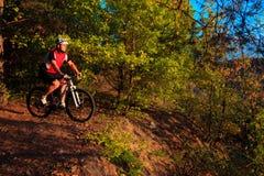 Катание велосипедиста на велосипеде в древесине Стоковое Изображение