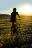 Катание всадника горного велосипеда через красивое поле соломы против горящего солнца лета на заходе солнца Стоковые Изображения