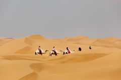 Катание каравана верблюдов в пустыне стоковое фото
