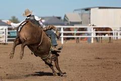 Катание ковбоя Bucking Bull на родео страны Стоковая Фотография RF
