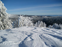 катание на лыжах ландшафта Стоковые Изображения