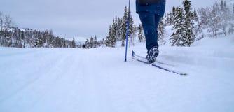 катание на лыжах Норвегии Стоковое Изображение RF