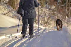 катание на лыжах Норвегии Стоковая Фотография RF