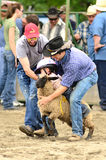 Катание овец Стоковые Фото