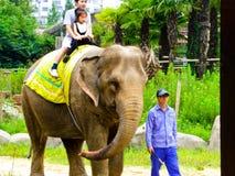 Катание слона Стоковое фото RF