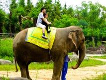 Катание слона Стоковая Фотография