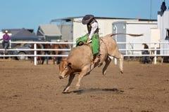 Катание Bull ковбоя на родео страны Стоковая Фотография
