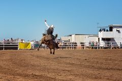 Катание Bull ковбоя на родео страны Стоковые Фото