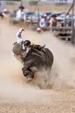 Катание Bull Стоковые Изображения RF