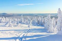 Кататься на лыжах в снеге на горных склонах в лесе на яркий солнечный день в зиме Стоковая Фотография RF