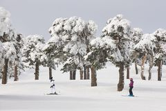 Кататься на лыжах на наклоне леса Белый ландшафт горы Зима Стоковое Фото