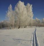 Кататься на лыжах в глубоком снеге в лесе зимы на солнечный день Стоковое Фото