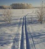 Кататься на лыжах в лесе зимы на солнечный день Стоковое фото RF
