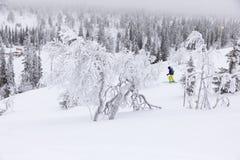 Кататься на лыжах в замороженной стране чудес Стоковое Изображение RF