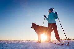 Кататься на лыжах с собакой Стоковое Изображение RF