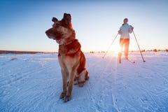 Кататься на лыжах с собакой Стоковые Фото