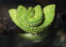 Катушки змейки Стоковые Фотографии RF