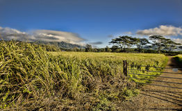 Кауаи, Гаваи. Стоковые Изображения