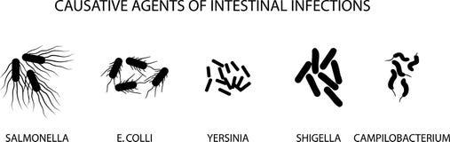 КАУЗАТИВНЫЕ АГЕНТЫ ОСТРЫХ КИШЕЧНЫХ ИНФЕКЦИЙ иллюстрация штока