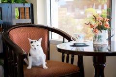 Кафе кота Стоковые Изображения RF