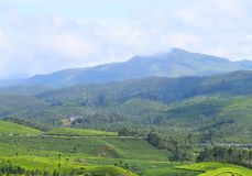 Кафе на открытом воздухе, зеленые холмы, и голубое небо - сочный зеленый естественный ландшафт в Munnar, Idukki, Керале, Индии стоковые изображения rf